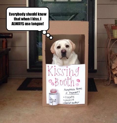 dogs labrador kissing fair - 8368645376