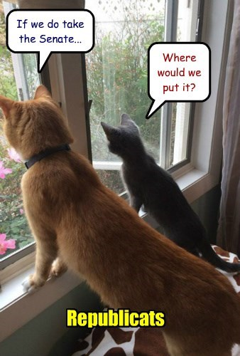 vote Cats politics - 8368694528