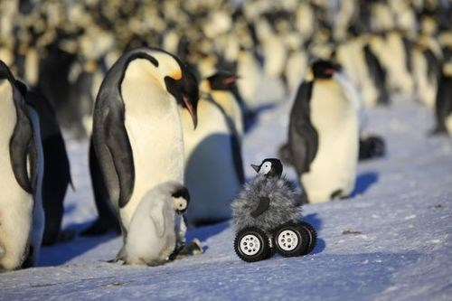 wtf penguins science funny - 8368720896