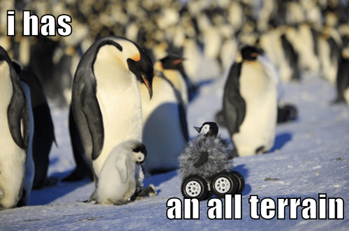 animals evolution off road what is it penguin