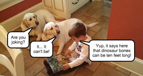 dogs labrador bone dinosaur i can has - 8368825344