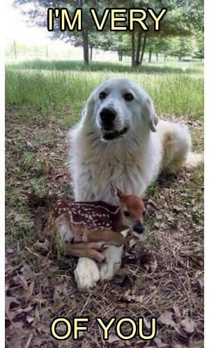 dogs puns deer fawn - 8368839936