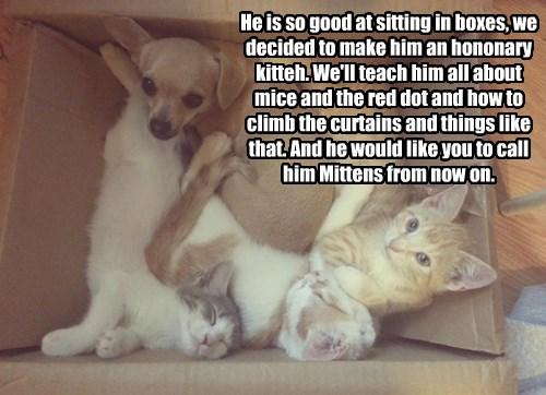 puppy kitten Cats - 8369058048