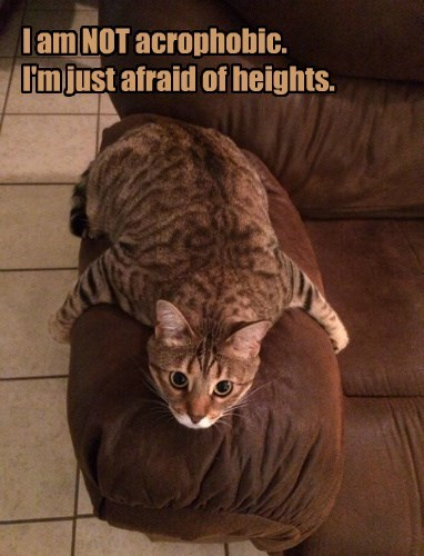 heights,Cats,scaredy cat