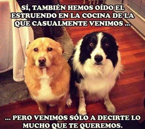 perros Memes animales - 8369106432
