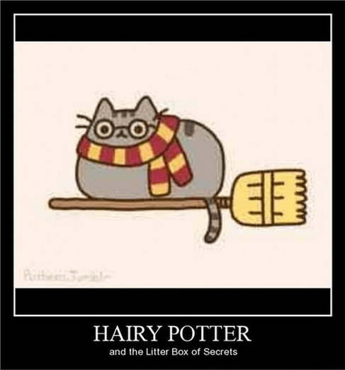Harry Potter,litter box,Cats,funny
