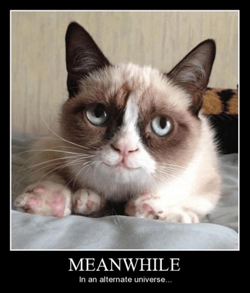 Grumpy Cat,happy,Cats,funny