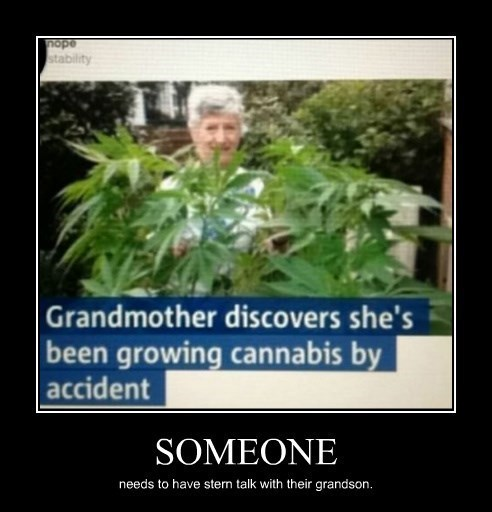 drugs accident grandma weed funny - 8369150720