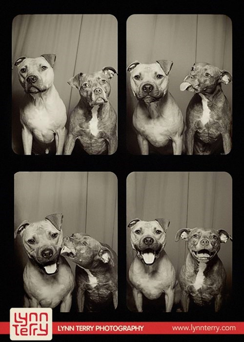 dogs photography cute photobooth - 8369292544