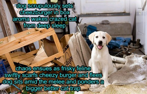 dog scrupulously sets cheezburger in box aroma wakes crazed cat from deep sleep chaos ensues as frisky feline swiftly scarfs cheezy burger and flees dog sits amid the melee and ponders a bigger better cat trap