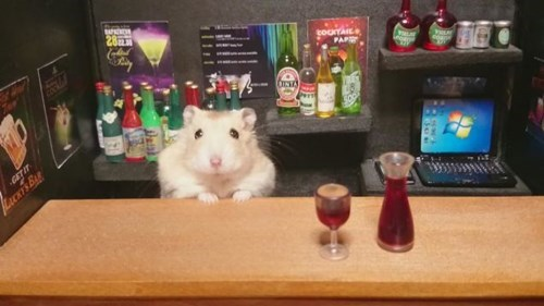 awesome cute hamster pub funny after 12 g rated - 8369352704