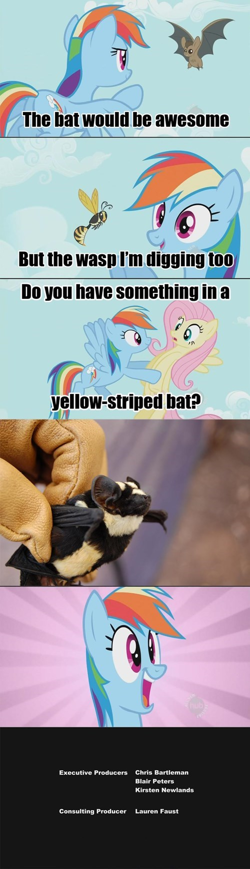 bats,pets,rainbow dash