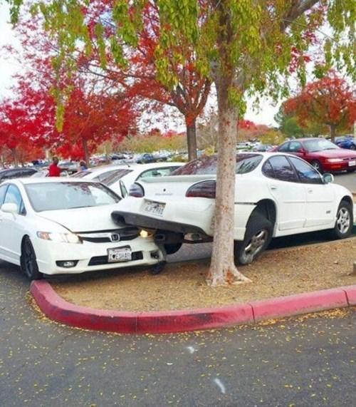 cars douchebag parkers parking - 8369530368