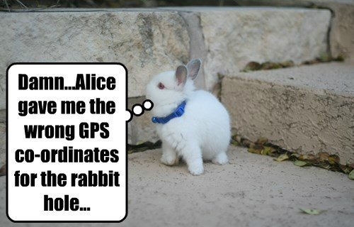 alice in wonderland,gps,rabbit,squee