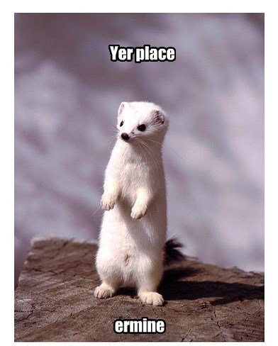weasel puns ermine - 8369737728