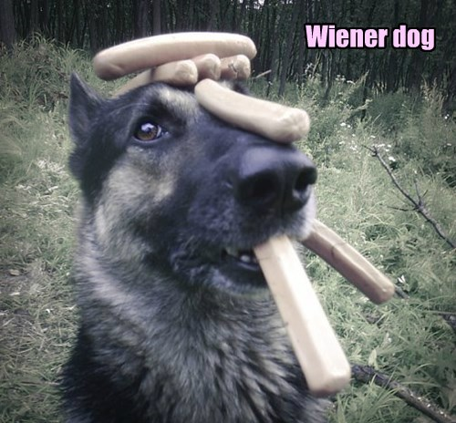 dogs german shepherd halloween wiener dog - 8369764096