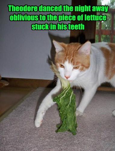 Awkward teeth dance Cats - 8370063616