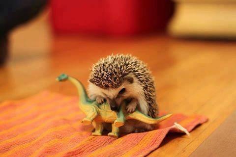 tiny cute hedgehog dinosaurs - 8370260224