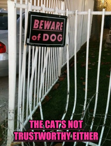 cat beware of dog caption untrustworthy