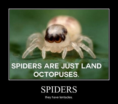 octopuses,spiders,tentacles,funny