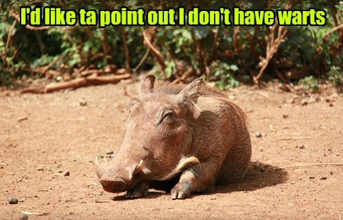 psa,you dont say,warthog