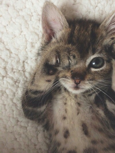 cute picture of a kitten cat all RAaawwrR and waking up