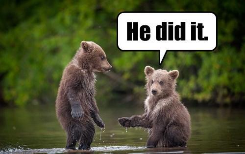 baby animals bears blame - 8370516736