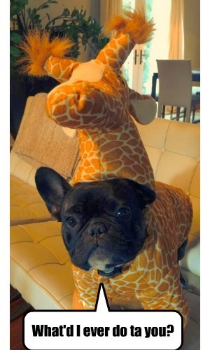 costume,dogs,french bulldogs,giraffes