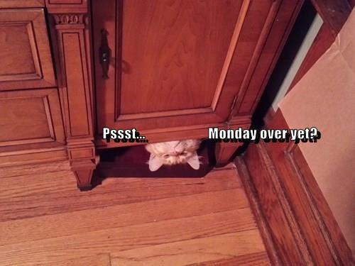 animals tabby Cats monday - 8370744064