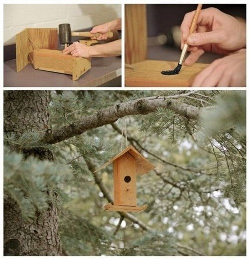 birds,birdhouses