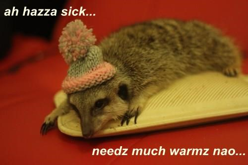 ah hazza sick... needz much warmz nao...