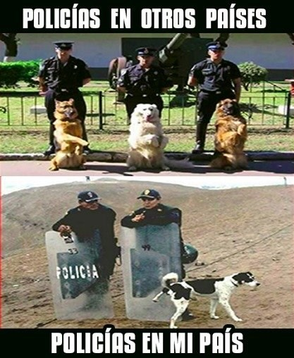 bromas perros Memes animales - 8371216128