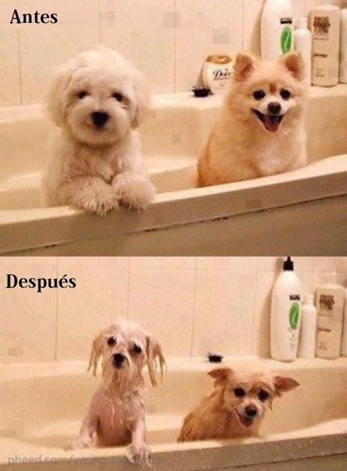 bromas perros Memes animales - 8371333376