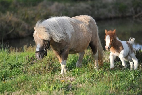 big and small horses