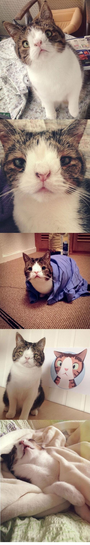 cute Cats - 8371399168