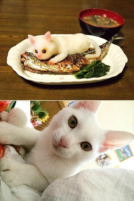 design radish carving Cats - 8371474176