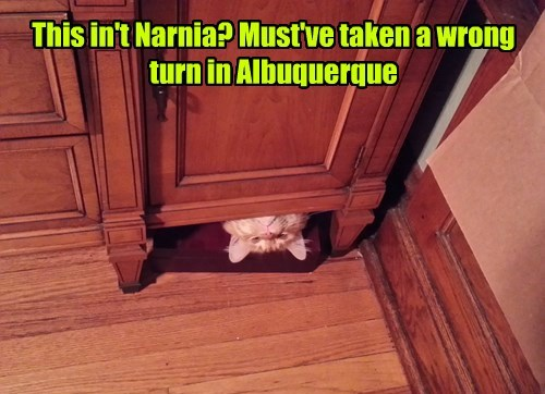 the lion the witch and the wardrobe whoops Cats narnia - 8371475200