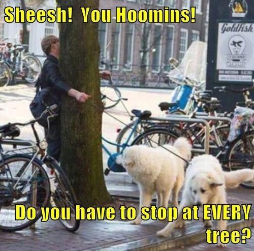 dogs human walk - 8371480832