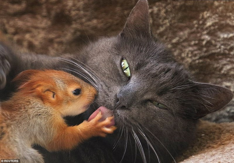 I Can Has Cheezburger Squirrel Funny Animals Online Cheezburger