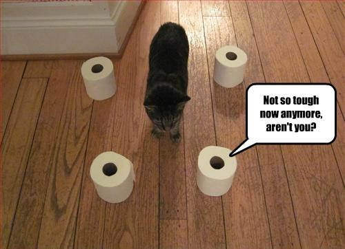revenge,uh oh,toilet paper,Cats