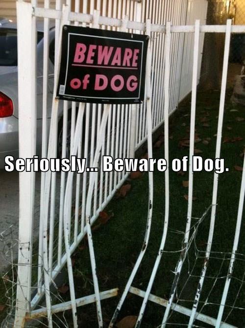 animals beware of dog seriously caption - 8371884800