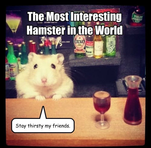tiny,the most interesting man in the world,hamster,bartender