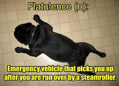 steamroller,dogs,flatulence,caption,flat