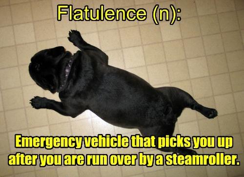 steamroller dogs flatulence caption flat - 8372449792