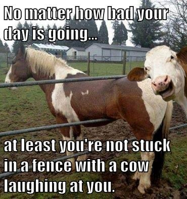 No matter how bad your day is going...  at least you're not stuck in a fence with a cow laughing at you.