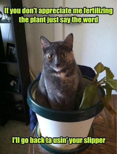 pee,if i fits i sits,Cats,plant