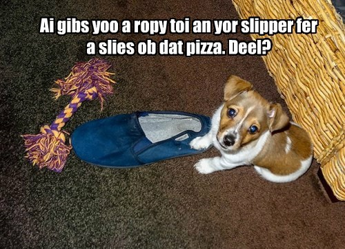 lets make a deal dogs pizza corgi - 8372950528