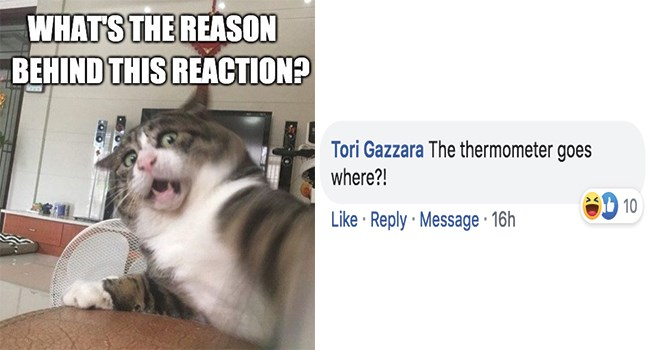 responses facebook funny cats challenge reaction Cats funny - 8372997
