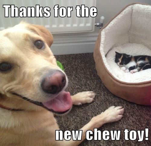 animals dogs chew toy new kitten caption - 8373013760
