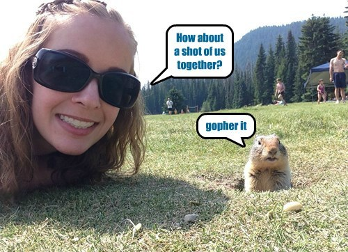 puns,portrait,gopher